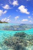 サンゴ礁330・500.jpg