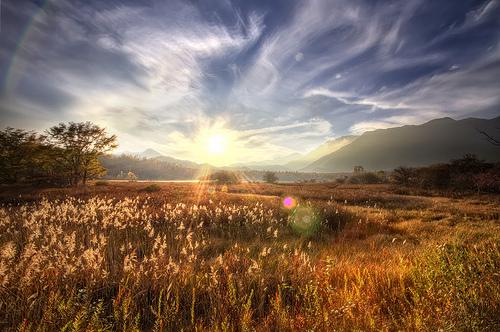 朝の風 IN 草原.jpg