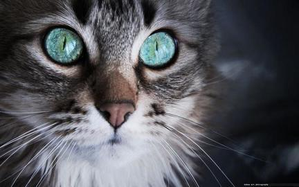 animal-animals-black-amp-white-cat-cats-Favim_com-401269.jpg