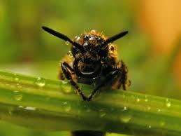 morning bee.jpg
